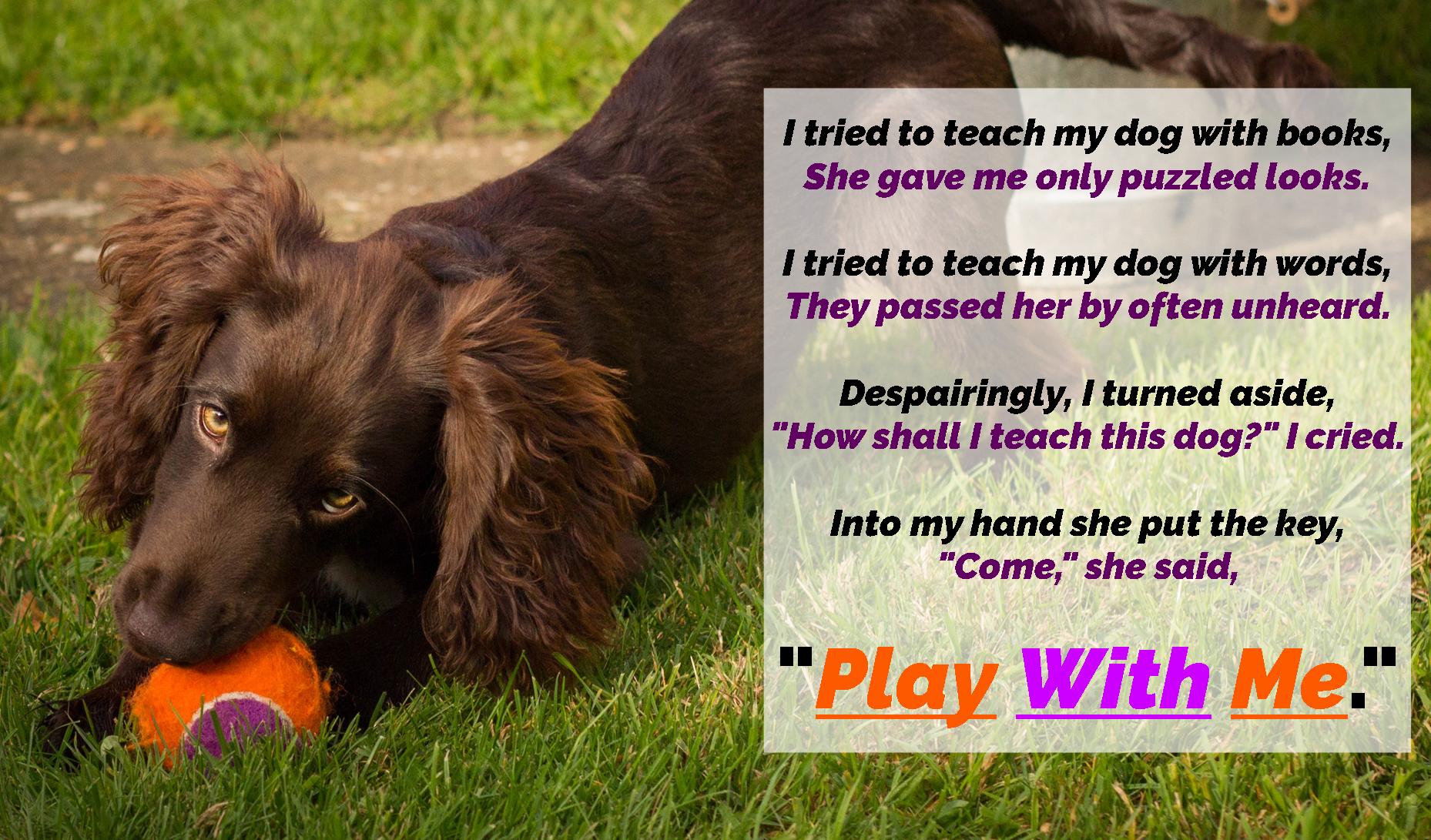 Follow My Lead Dog Training Coningsby